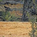 """Still Searching"" by Arizona_Photography"