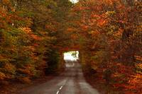 Autumn Tunnel 2