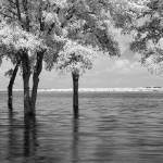 """Flood - infrared trees"" by miir"