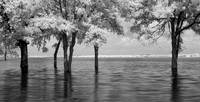 Flood - infrared trees