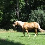 """""""Stallion"""