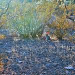 """Desert Bunny"" by Arizona_Photography"