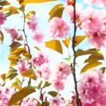 """""""Blossom Print"""" by pvalentega"""