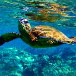 """""""Sea Turtle"""" by kdspenpaint"""