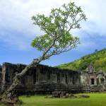 """Lonesome Tree of Champasak"" by davidsmart"