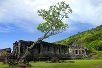 Lonesome Tree of Champasak