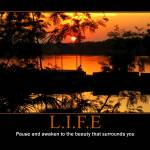 """LIFE"" by allenpatrick"