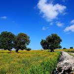 """Natura Siciliana"" by Lupinantofoto"