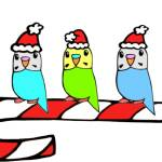 """Budgies- Christmas"" by parakeetart"