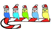 Budgies- Christmas
