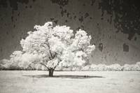 An Alerted State - infrared tree landscape