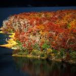 """""""Autumn Colors in Lake Guillelmo, Patagonia, Argent"""" by Irudi"""