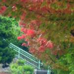 """Fall colors and staircase"" by BarbaraBerger"