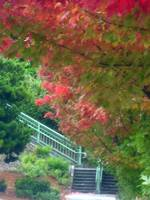 Fall colors and staircase