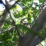 """""""Squirrel"""" by oneblondemop"""