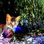 """""""Cat on Oak Roots"""" by JudyMarisa"""