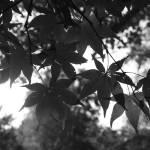 """""""Leaves"""" by oneblondemop"""