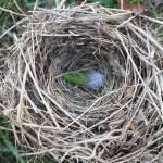 """""""nest"""" by oneblondemop"""