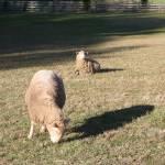 """""""sheep"""" by oneblondemop"""