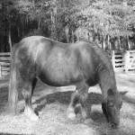 """""""horse"""" by oneblondemop"""