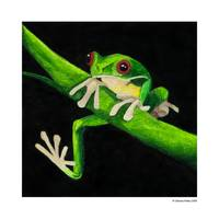 Green Tree Frog 5