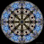 """Stained-Glass Cathedral Window Mandala"" by annesmandalas"
