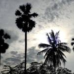 """Palm Silhouette"" by davidsmart"