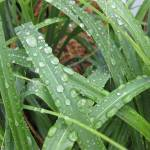 """droplets on grass"" by RebeccaThompson"