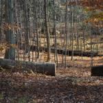 """Fallen Logs"" by ArianasArt"