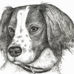 """Emma the Springer Spaniel"" by BThomasStudios"