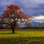 """Apple tree"" by BillyWilson"
