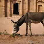"""""""Desert Donkey"""" by davidsmart"""