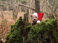 Bear searching the forest for Santa