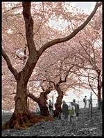 A Stroll In Central Park, 2004
