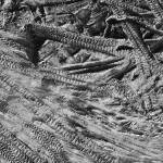 """cat tracks"" by brechinmaclean"