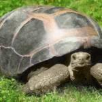 """""""Turtle"""" by kdspenpaint"""
