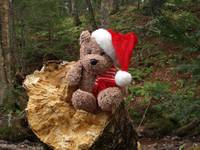 Christmas bear searching the forest for Santa.