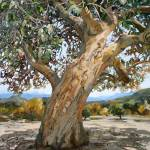 """great oak"" by margaretlarlham"