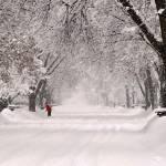 """""""WinterWonder"""" by janelkaufman"""