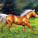 """Gallop"" by DPCooper"