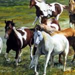 """Mustangs"" by DPCooper"