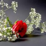 """rosey"" by mitnachel"