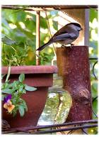 Little Feeder on the Porch