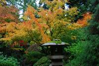Fall Colors At The Portland Japanese Garden