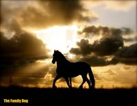 The return of the silhouetted horse