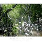 """White Ibis - Key Largo, FL"" by CCordelia"