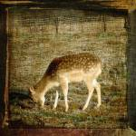 """Gentle deer"" by tamtama"