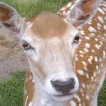 """""""portrait of """"The gentle deer"""""""" by tamtama"""