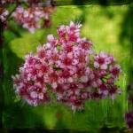 """bloom"" by tamtama"