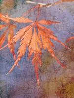 Red Maple On Bluish Background